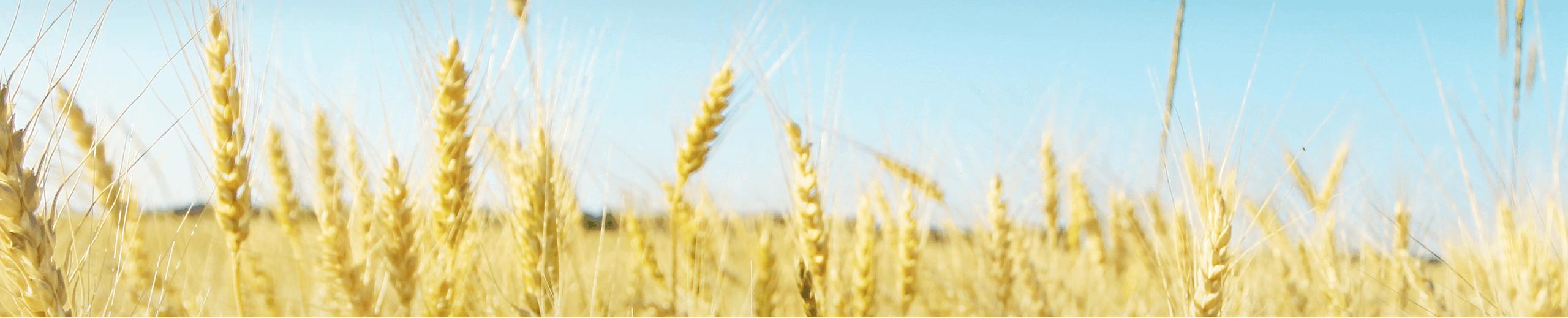 oats-banner